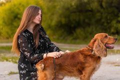 Słodki młodej dziewczyny i psa odprowadzenie w jesień parku Pies tropi dostrzega, Dziewczyna w sukni trenuje zwierzęcia domowego zdjęcie royalty free