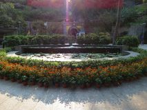 Słoneczniki i lotosowi kwiaty wita gości przy wejściem miejscowego park obrazy royalty free