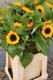 słoneczniki w wiadrze zdjęcia stock