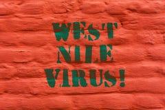 Słowo pisze tekstowi Zachodniego Nil wirusa Biznesowy pojęcie dla Wirusowej infekcji przyczyny typowo rozprzestrzenia komar ścian fotografia royalty free