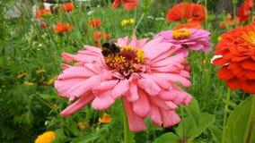 Så färgglad sommardag i trädgården fotografering för bildbyråer