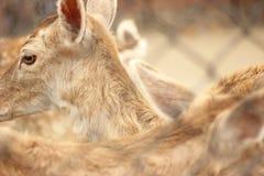 Så många behandla som ett barn deers inom royaltyfri fotografi