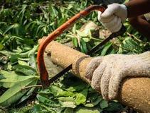 Såg bitande trä för snickaren med Hantverkare som arbetar med handsågen Royaltyfria Bilder