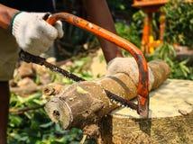 Såg bitande trä för snickaren med Hantverkare som arbetar med handsågen Fotografering för Bildbyråer