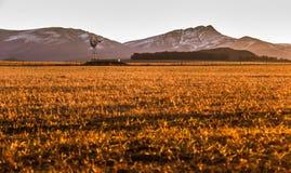 Såg, fält och sol royaltyfri bild