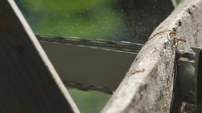Såga ett träbräde med en chainsaw, processen för sidosikt, såga, en stor wood planon och ett funktionsdugligt organ för såg` s, s stock video
