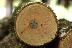 Sågad Wood textur Fotografering för Bildbyråer