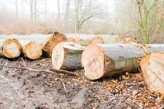 Sågade trädstammar ligger bredvid en skogbana royaltyfria foton