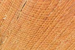Sågat slut för snitt för trädstam upp Arkivfoto
