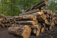 Sågen loggar, träd, sågverket, bråte Royaltyfri Bild