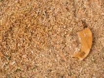Sågspån av torrt alträ med stycken av det torra bruna skället på jordning Royaltyfri Foto
