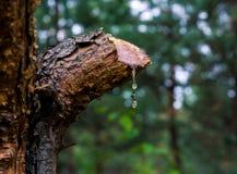Således sörja på på skogen Royaltyfri Foto