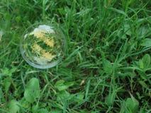Såpbubbla på ett gräs Arkivfoto