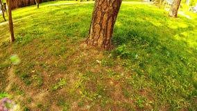 Såpbubblor flyger över gräset nära trädet i parkera lager videofilmer