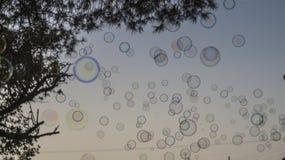Såpbubblor med trädet på himmel royaltyfri fotografi