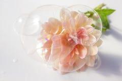 Såpbubblor och blomma Arkivbild