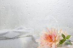 Såpbubblor och blomma Arkivbilder
