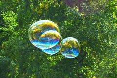 Såpbubblor på bakgrunden av träd royaltyfria foton