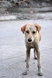 sårad hund Arkivbilder