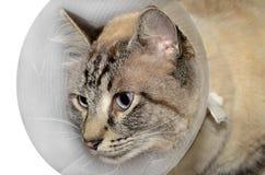 sårad katt Arkivfoto