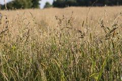 Sått på fältet i ett kultiverat fält arkivfoto