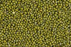 Sème des fèves de mung utiles pour le fond de texture de santé Photo stock