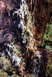 Sève d'arbre Photographie stock
