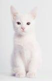 Séance blanche de chaton Photographie stock libre de droits