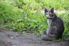Séance de chat photographie stock