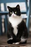 Séance de chat image libre de droits