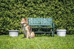 Séance de chien Image stock