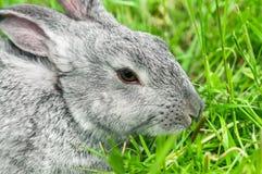 Séance de lapin Image stock