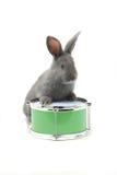Séance de lapin photos libres de droits