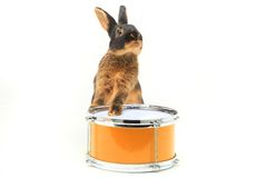 Séance de lapin photo stock