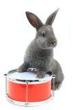 Séance de lapin photographie stock libre de droits