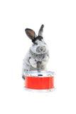 Séance de lapin photos stock