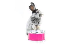 Séance de lapin photo libre de droits