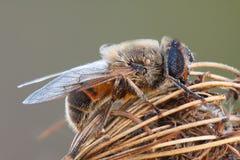 séance de mouche de fleur macro Photographie stock libre de droits