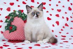 séance de ragdoll d'impression de chaton de coeur de tissu Images stock
