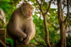 Séance de singe images stock