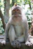 Séance de singe Image stock