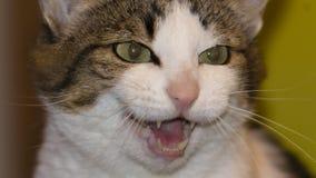 Séance et sourire rayés drôles de chaton Photo stock