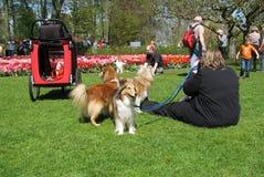 Séance photos de chien photos stock