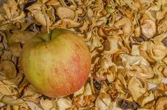 Séché et les fruits frais Image libre de droits