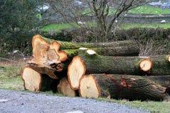 Séchage de bois de construction Images libres de droits