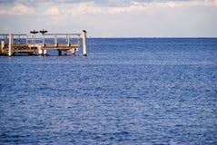 Séchage de Kormoran à la côte Photo stock