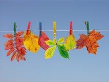Séchage de lame d'automne images libres de droits