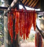 Séchage de loge de Natif américain du Roi Salmon Fish Meat Catch Hanging photo libre de droits