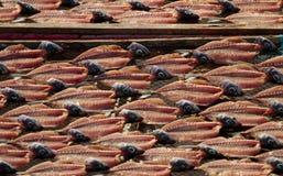 Séchage de poissons Images libres de droits
