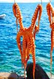 Séchage de poulpe sur le soleil Images stock